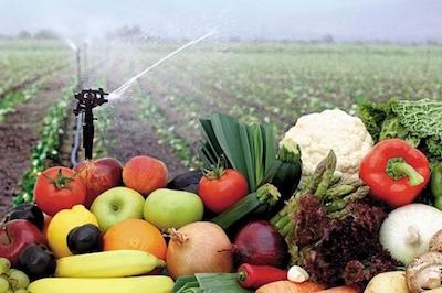 Cómo obtener el certificado fitosanitario de SENASA en Perú