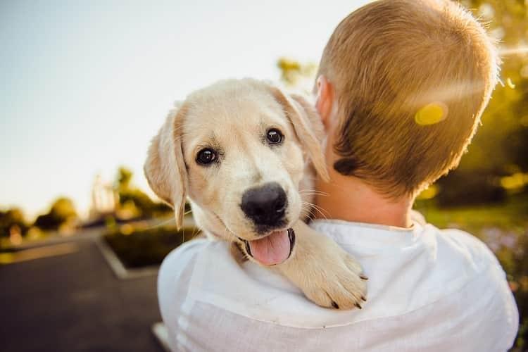 perrito-adorable-min