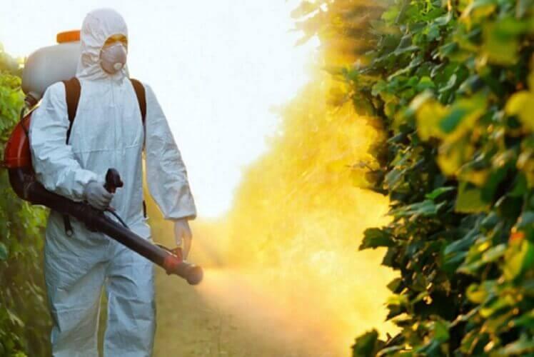 Cómo obtener el certificado fitosanitario en Guatemala