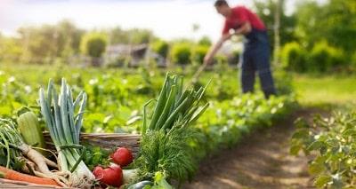 agricultura-alimentos